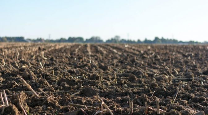 Agricoltura ed Economia
