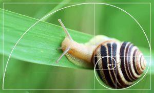 Sezione Aurea Fibonacci